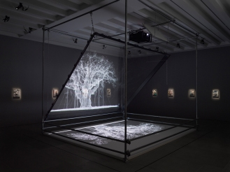 Mat Collishaw, Installation view, 2017, Courtesy the artist and BlainSouthern, Photo Peter Mallet (2)