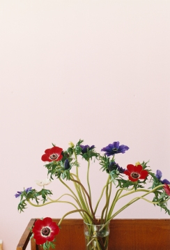Wolfgang Tillmans, Anemone, 2003. Image courtesy Ordovas Gallery